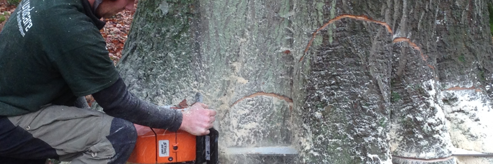Tree Management at its best